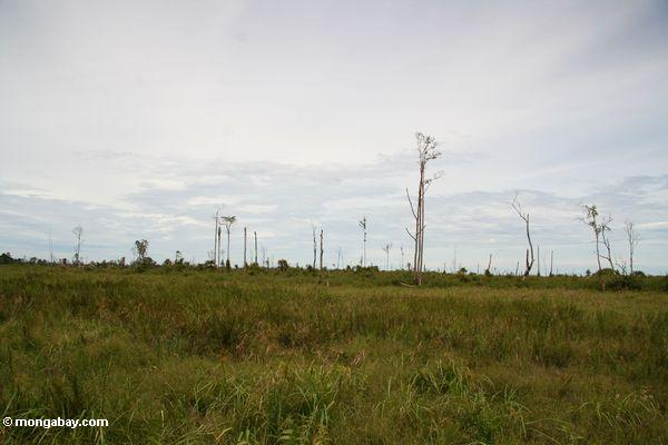 Deforested landscape on the boundary of Tanjung Puting National Park (Kalimantan, Borneo - Indonesian Borneo)