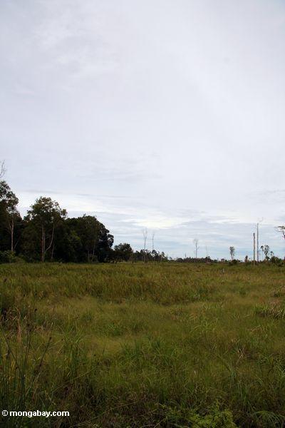 Deforested plain just outside Tanjung Puting National Park (Kalimantan, Borneo - Indonesian Borneo)