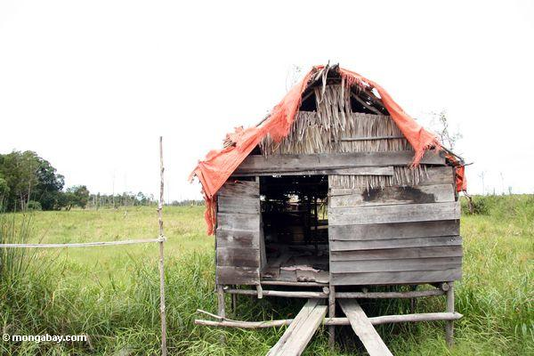 Abandoned homestead in deforestated area (Kalimantan, Borneo - Indonesian Borneo) -- kali9701
