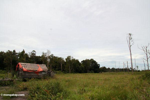 Abandoned cabin just outside Tanjung Puting National Park (Kalimantan, Borneo - Indonesian Borneo)