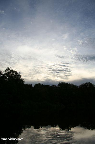 Sunset in the Borneo rainforest (Kalimantan, Borneo - Indonesian Borneo)