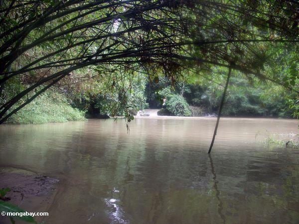 Bantimurung river (Sulawesi - Celebes) -- rb080