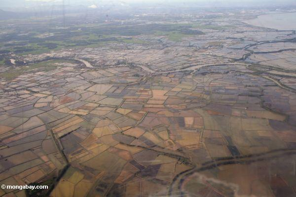 Rice fields planted on former mangrove forest land (Sulawesi - Celebes)