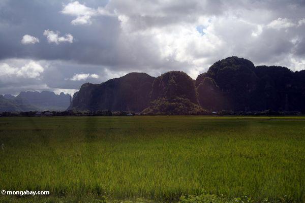 Sulawesi limestone mountains (Sulawesi - Celebes)
