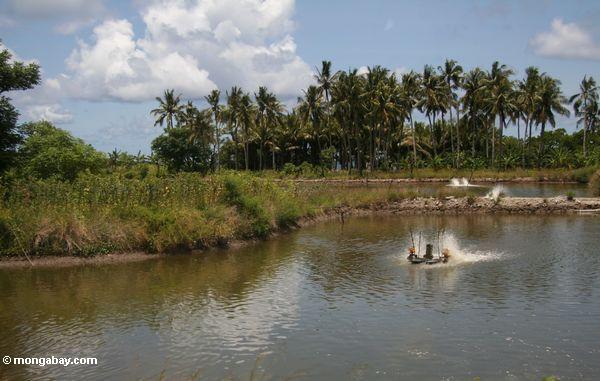 Shrimp pond with aeration turbine (Sulawesi - Celebes)
