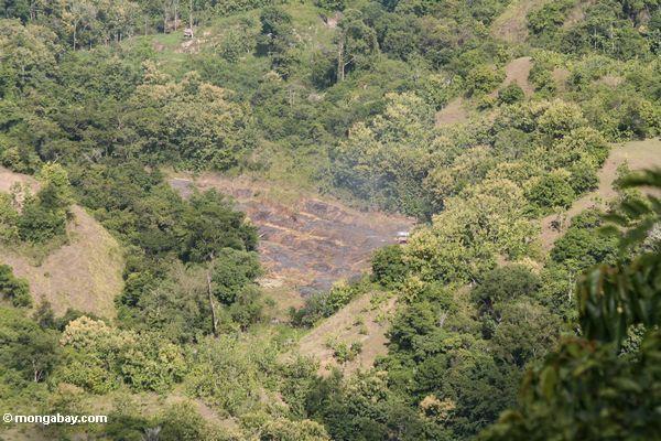 Slashing-and-burning (Sulawesi - Celebes)