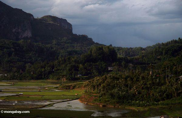 Rice fields (Toraja Land (Torajaland), Sulawesi)
