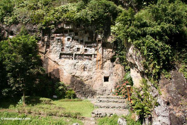 Effigies of the dead haning from limestone walls at Lemo (Toraja Land (Torajaland), Sulawesi)