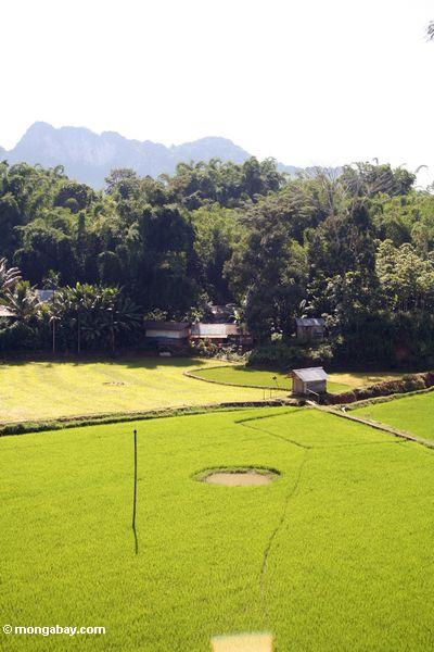 Fish pond in a rice field (Toraja Land (Torajaland), Sulawesi) -- sulawesi6688