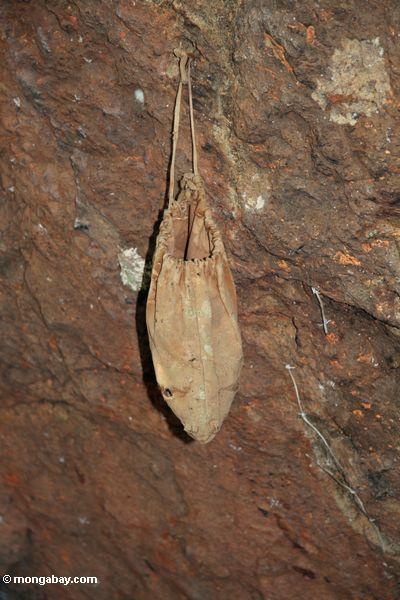 Sack at a cave grave site at Lemo (Toraja Land (Torajaland), Sulawesi)