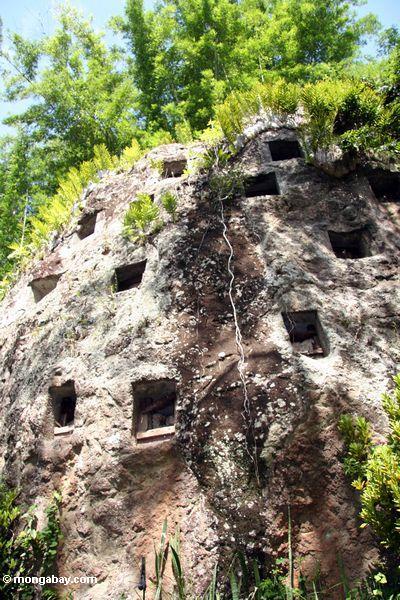 Tombs carved in a rock face at Lemo (Toraja Land (Torajaland), Sulawesi)