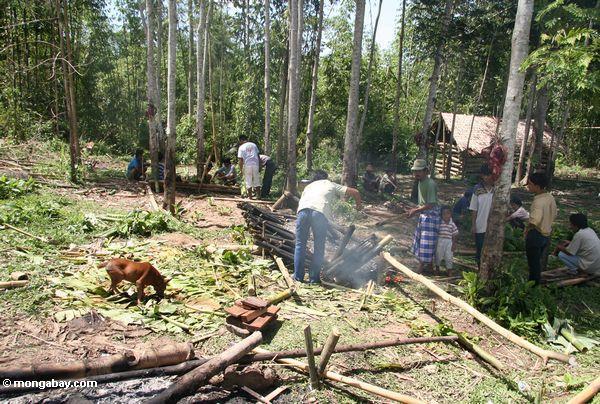 Food preparation for a funeral (Toraja Land (Torajaland), Sulawesi)