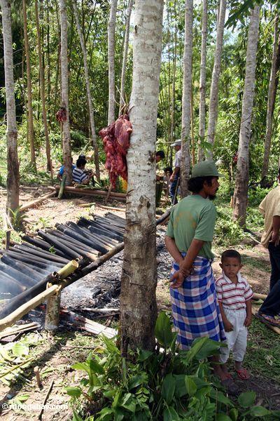 Food preparation for a funeral (Toraja Land (Torajaland), Sulawesi) -- sulawesi6773