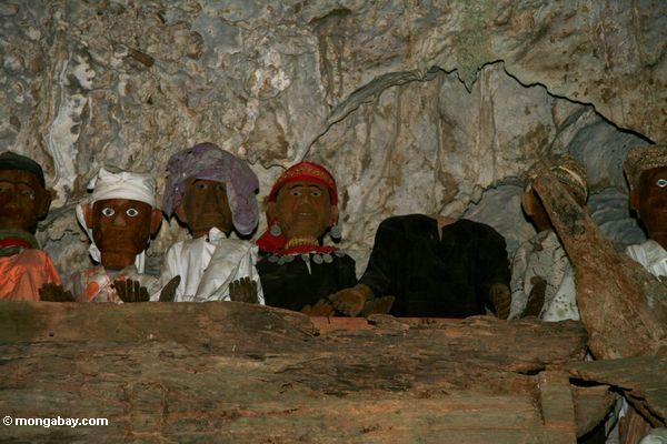 Coffins and wooden effigies in cave at Londa Nanggala (Toraja Land (Torajaland), Sulawesi)