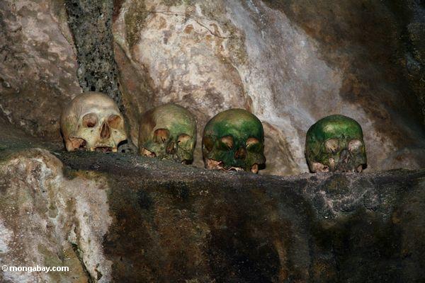 Green algae-covered skulls in cave at Londo Nanggala (Toraja Land (Torajaland), Sulawesi)