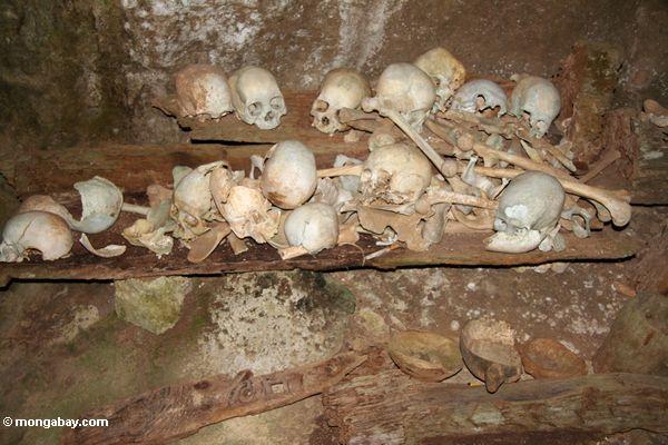 Human bones in cave at Londa Nanggala (Toraja Land (Torajaland), Sulawesi)
