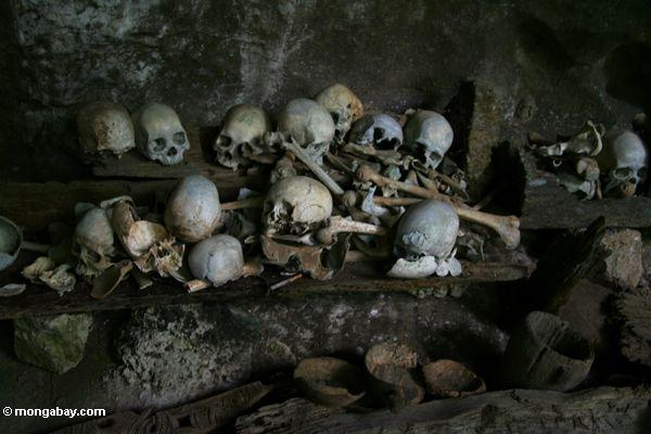 Human bones left in cave as traditional burial practice at Londa Nanggala (Toraja Land (Torajaland), Sulawesi)