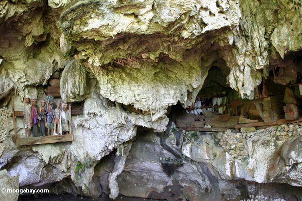 Londa Nanggala cave with wooden funeral effigies and hanging coffins (Toraja Land (Torajaland), Sulawesi)