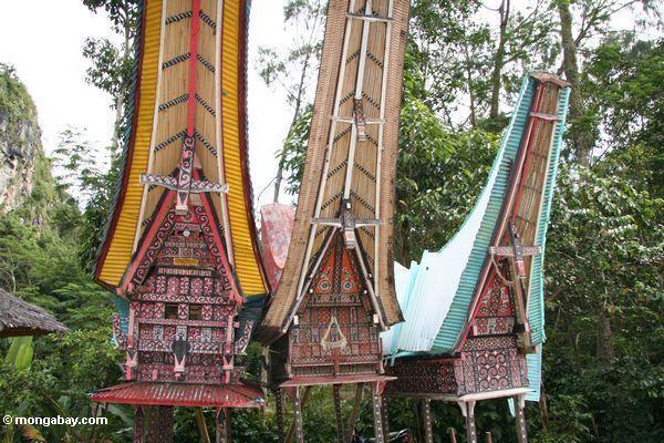Traditional Tongkonan wood tomb (Toraja Land (Torajaland), Sulawesi)