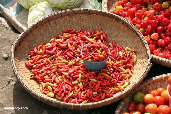 Chilis at the market in Rantepao (Toraja Land (Torajaland), Sulawesi)