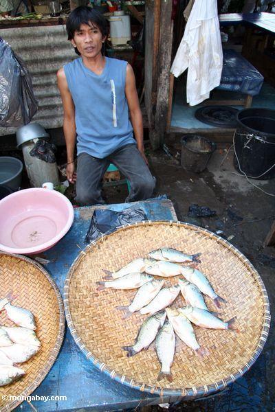 Fish for sale in market at Rantepao (Toraja Land (Torajaland), Sulawesi)
