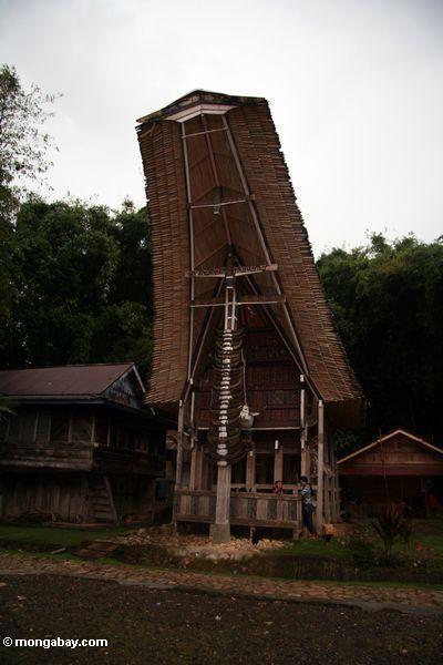 Toraja house at Ketu Kese (Toraja Land (Torajaland), Sulawesi)
