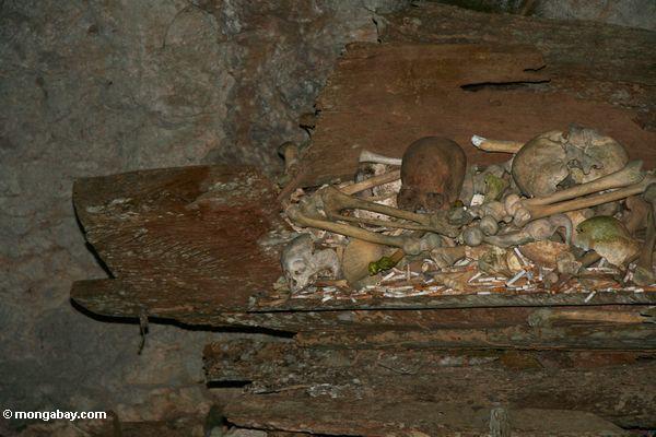 Old human bones in a coffin (Toraja Land (Torajaland), Sulawesi)