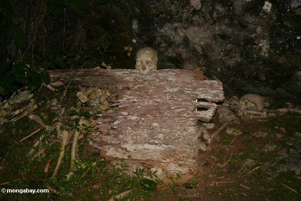 Human skull on rock (Toraja Land (Torajaland), Sulawesi)