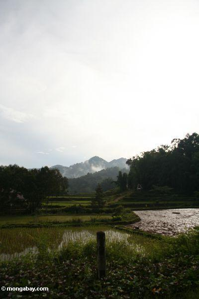 Rice fields (Toraja Land (Torajaland), Sulawesi) -- sulawesi7468