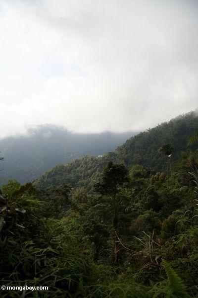 Ridge forest of Sulawesi (Sulawesi - Celebes) -- sulawesi7473