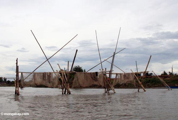 Fishing nets on river draining Lake Tempe (Sulawesi - Celebes)