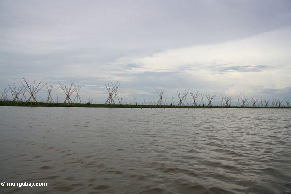 Bamboo stakes placed to control water hyacinth at Lake Tempe (Sulawesi - Celebes)