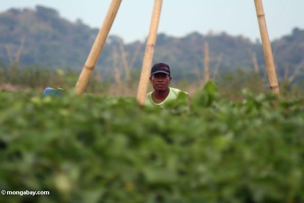 Man working on a bungka (Sulawesi - Celebes)