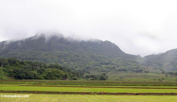 Rice and mountains (Sulawesi - Celebes)