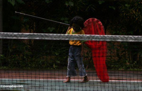 Young boy with butterfly net patrolling a tennis court (Sulawesi - Celebes)