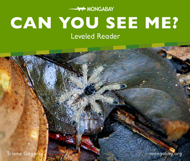 Can you see me? - Leveled Reader (Kindergarten)