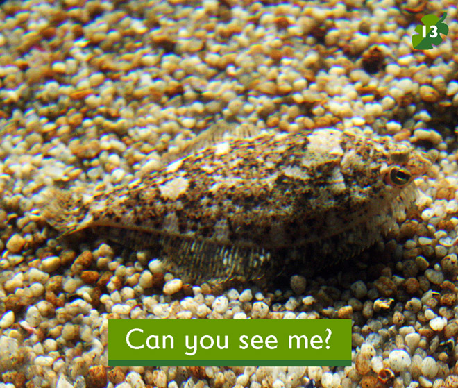 Can you see me i am a fish for What kind of fish am i