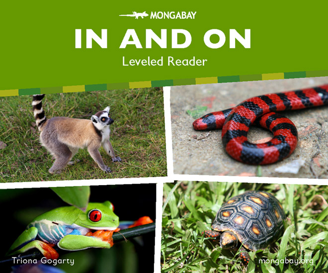 In And On - Leveled Reader (Kindergarten)