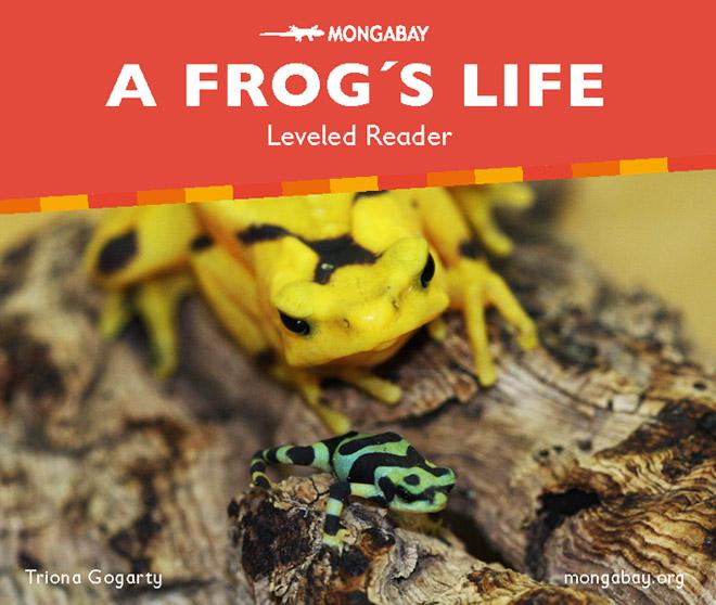 A frog's life (Leveled reader)