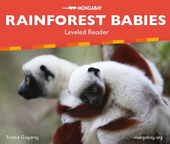 Rainforest Babies (Leveled Reader)