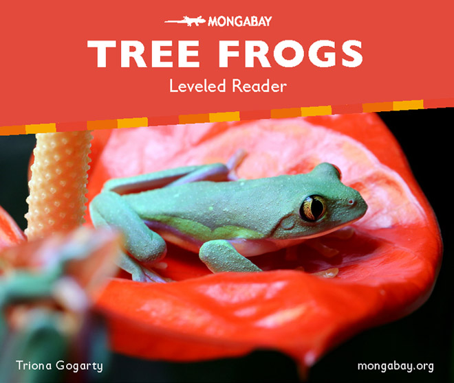 Tree Frogs (Leveled reader)
