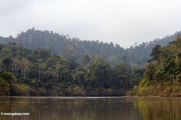Timber 'mass graves' uncovered as Malaysian authorities pursue illegal loggers