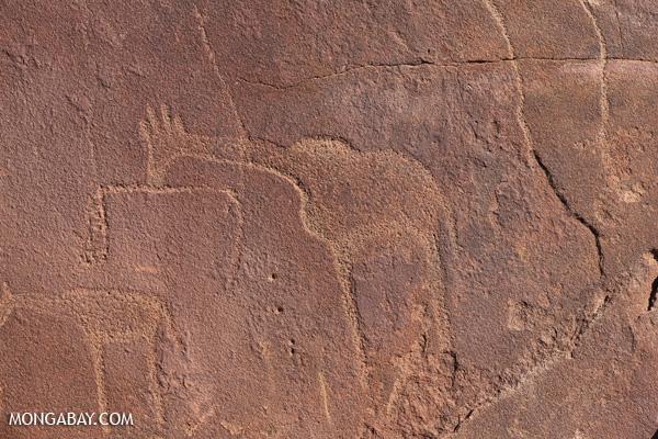 Rock carvings at Twyfelfontein