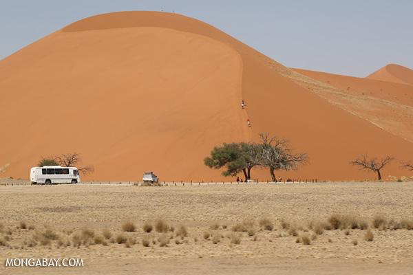Sand dunes in Sossusvlei