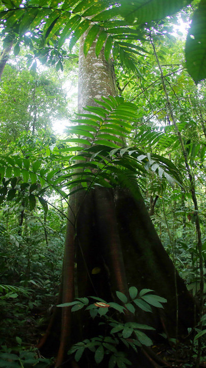 Rainforests In Central And South America
