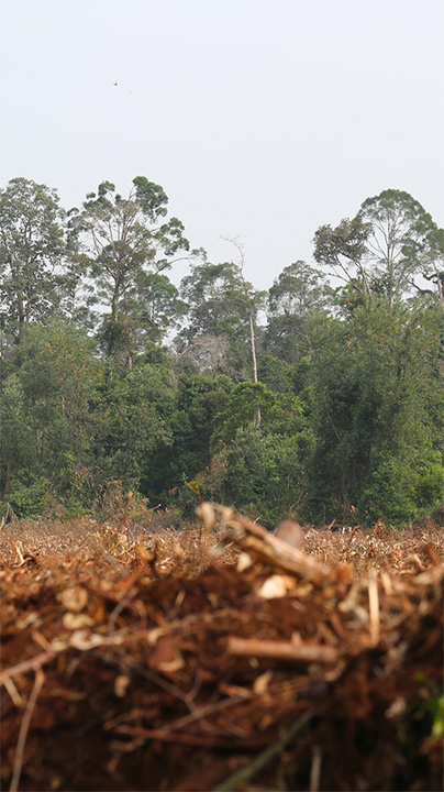 Action Alert Save Urban Forests Now American Forests >> Deforestation