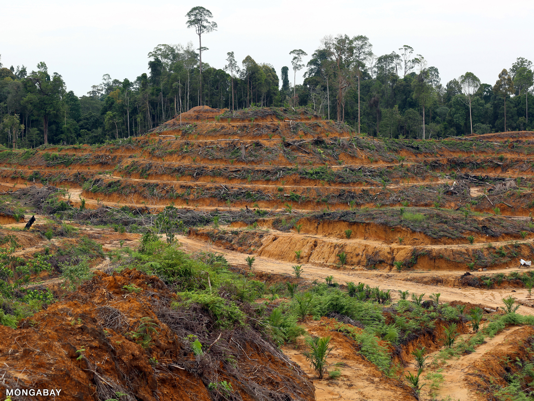 Why are rainforests being destroyed?
