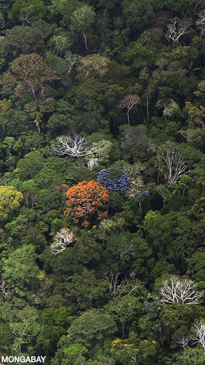 Ecology Of The Amazon Rainforest