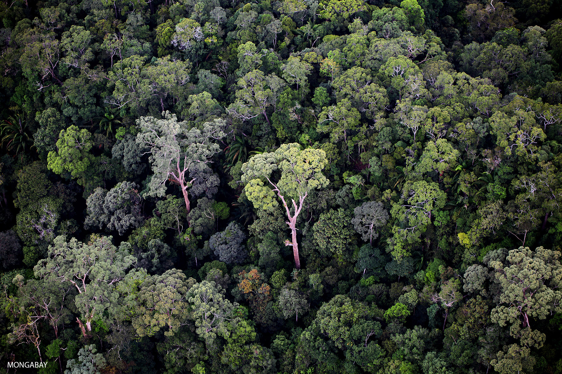 An overview of the rain forests