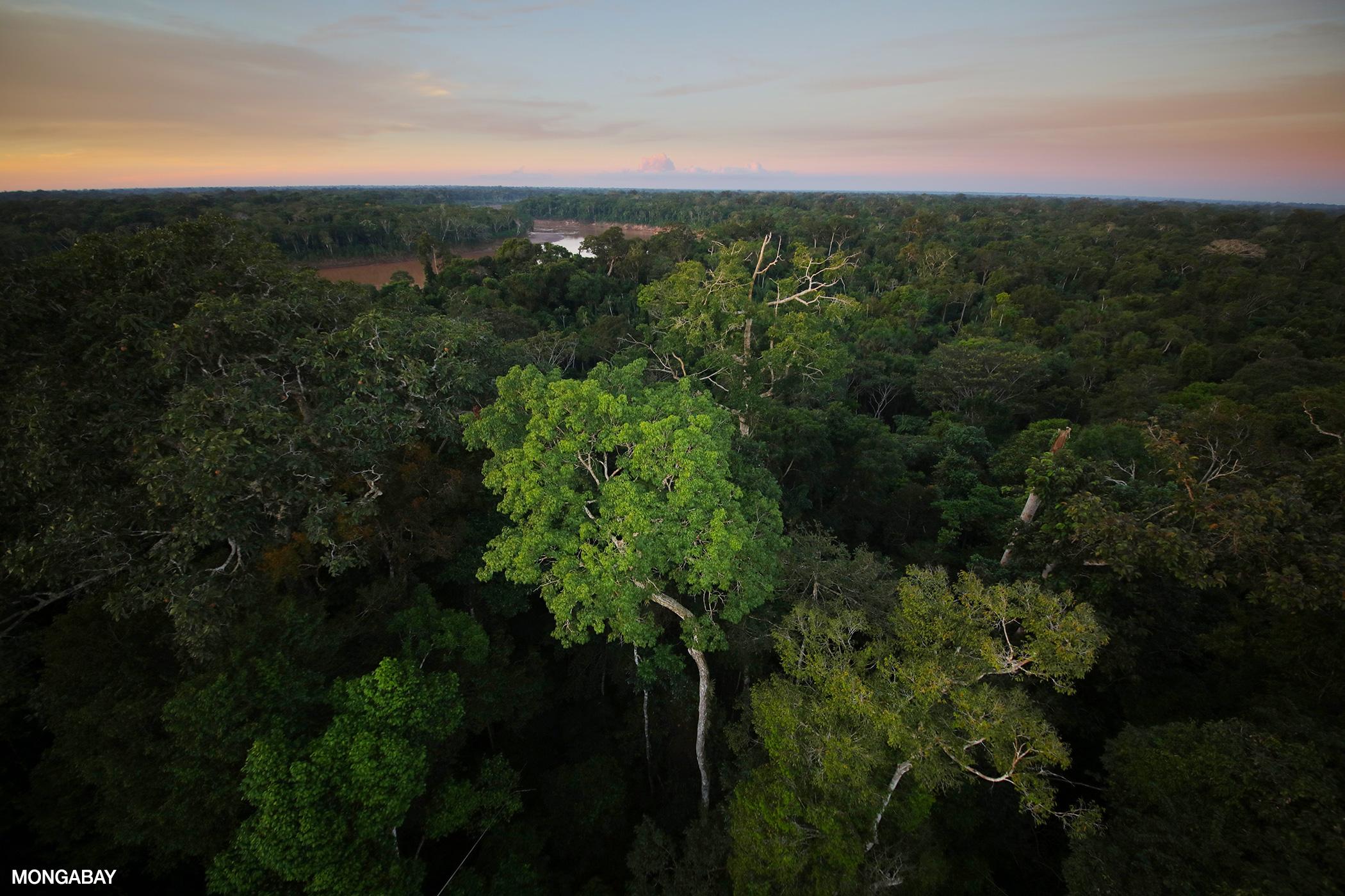 The Amazon Rainforest: The World's Largest Rainforest